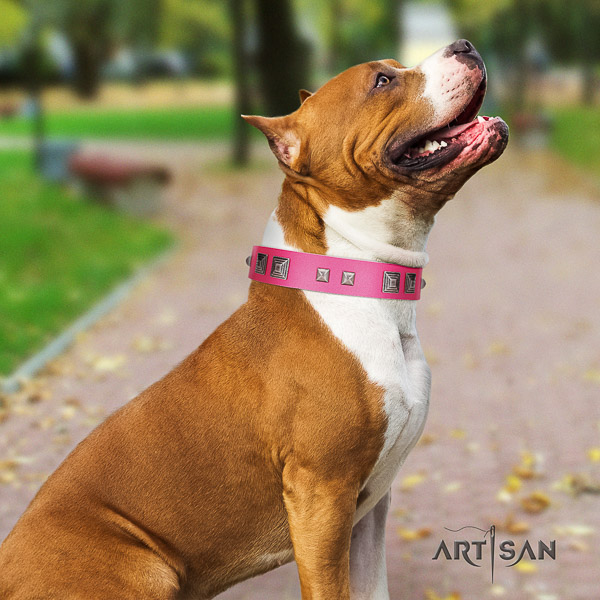 Amstaff handmade natural genuine leather dog collar for everyday walking