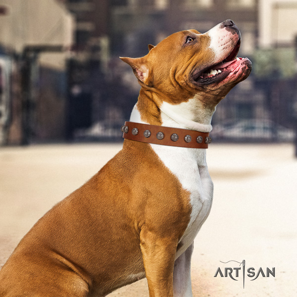 Amstaff inimitable genuine leather dog collar for easy wearing