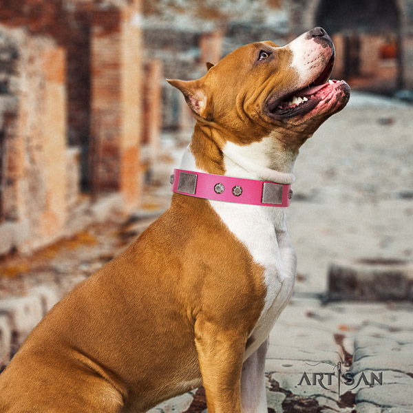 Amstaff extraordinary full grain natural leather dog collar for everyday use