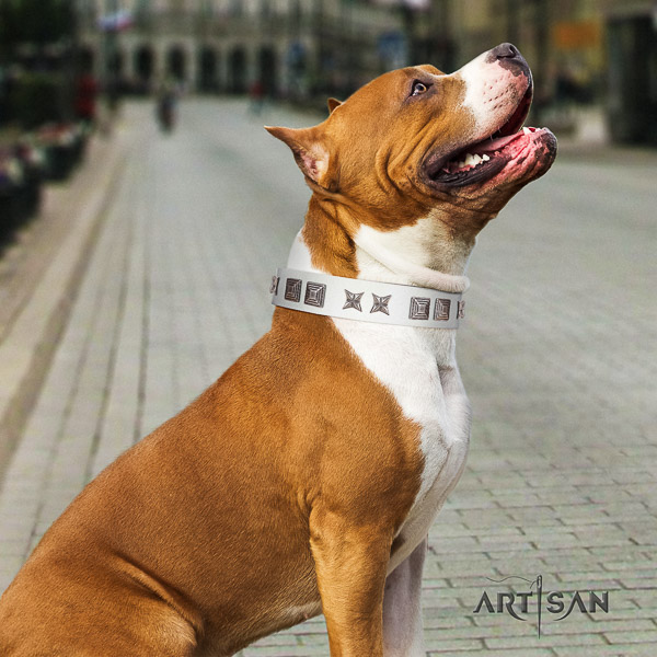 Amstaff easy wearing leather dog collar for basic training