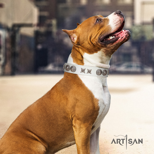 Amstaff stylish design genuine leather dog collar for everyday use