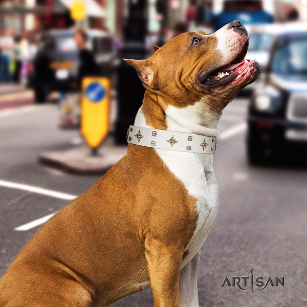 Amstaff stunning genuine leather dog collar for everyday walking