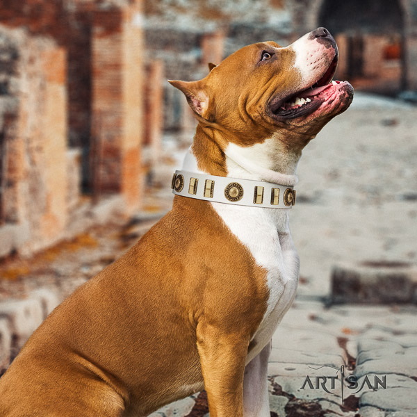 Amstaff exceptional full grain leather dog collar for easy wearing