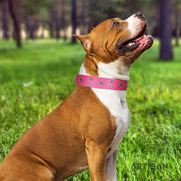 Amstaff embellished leather dog collar for comfy wearing