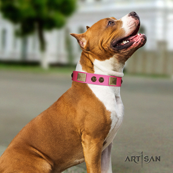 Amstaff handcrafted full grain natural leather dog collar for walking