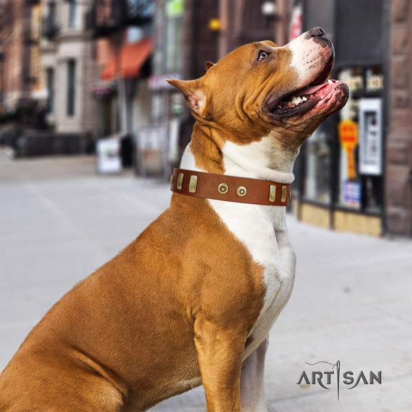 Amstaff easy to adjust full grain leather dog collar for daily walking