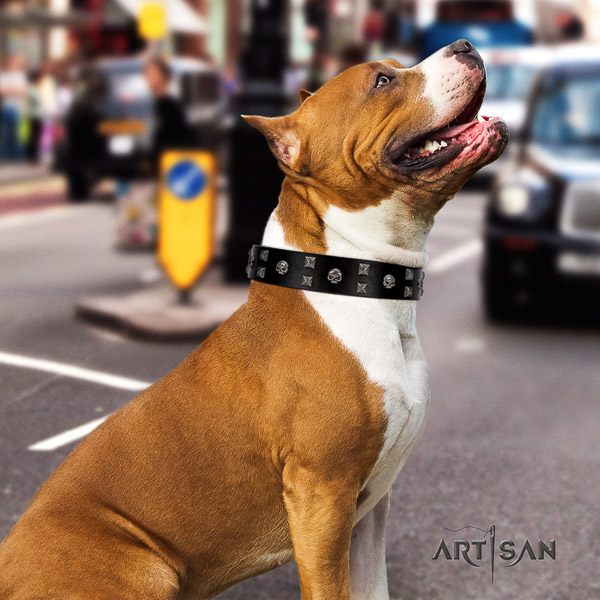 Amstaff designer full grain natural leather dog collar for everyday walking