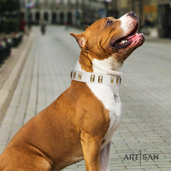 Amstaff incredible leather dog collar for daily walking