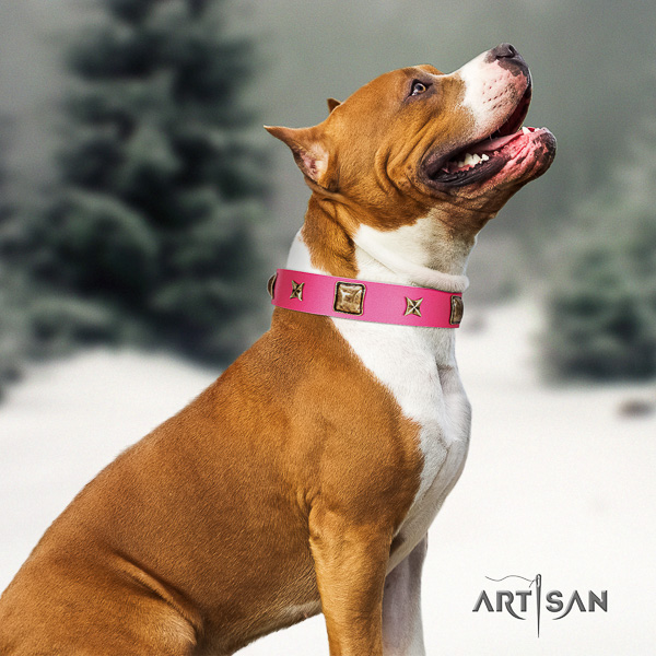 Amstaff remarkable full grain natural leather dog collar for everyday walking