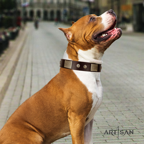Amstaff stunning full grain genuine leather dog collar for stylish walking