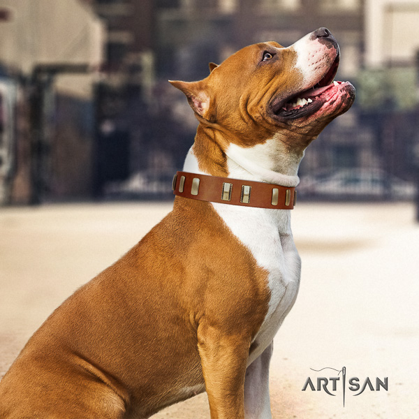 Amstaff adorned natural genuine leather dog collar for easy wearing