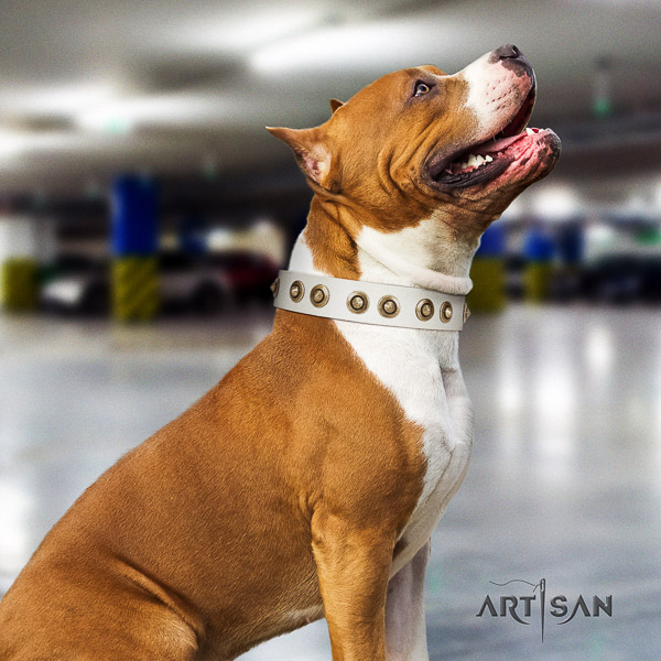 Amstaff exceptional full grain leather dog collar for comfortable wearing