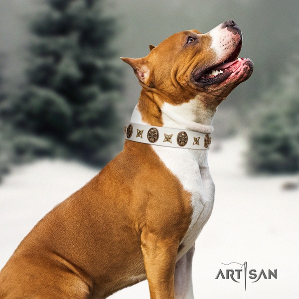 Amstaff remarkable leather dog collar for handy use