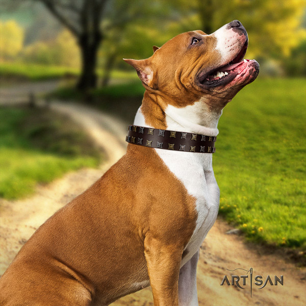 Amstaff studded natural genuine leather dog collar for everyday walking
