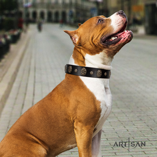 Amstaff awesome full grain natural leather dog collar for everyday walking