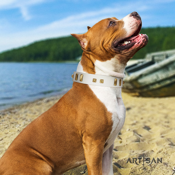 Amstaff handmade full grain leather dog collar for everyday use