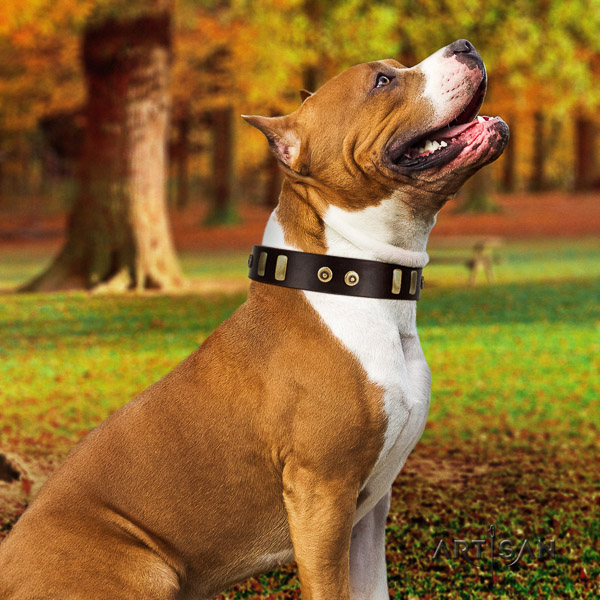 Amstaff designer leather dog collar for comfortable wearing