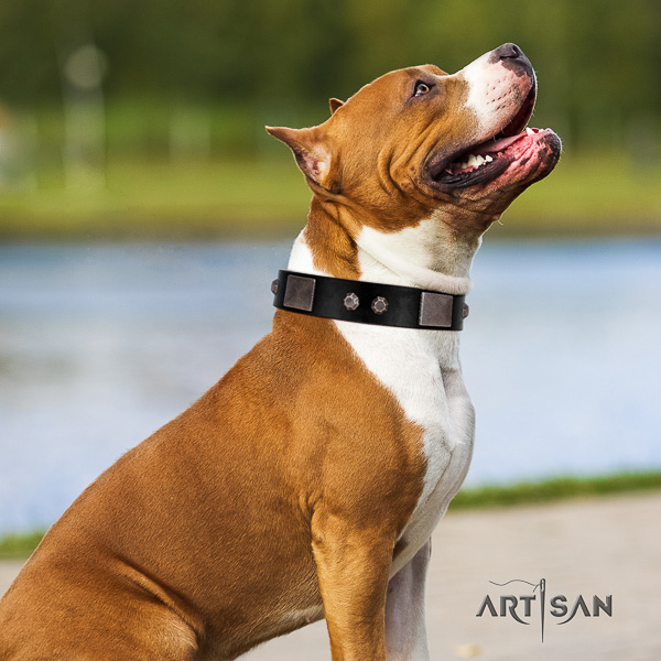 Amstaff fashionable full grain genuine leather dog collar for everyday use