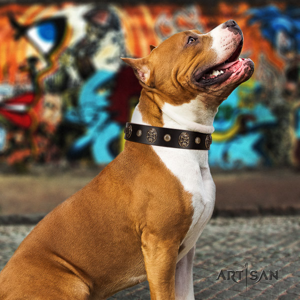 Amstaff fine quality genuine leather dog collar for everyday walking