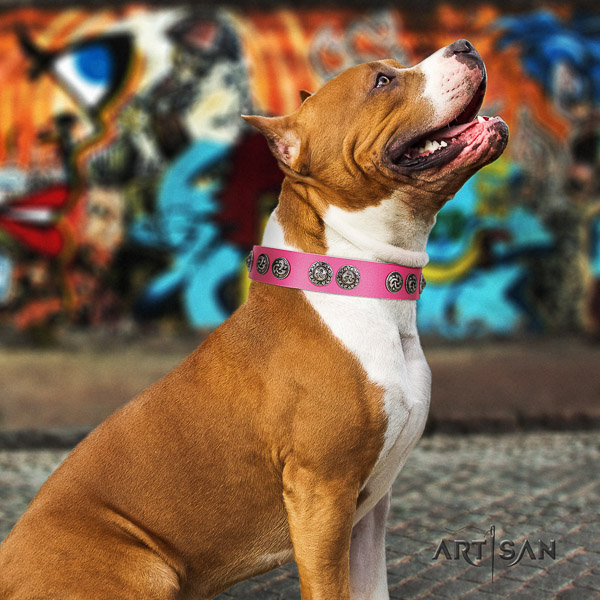 Amstaff easy to adjust natural genuine leather dog collar for comfortable wearing
