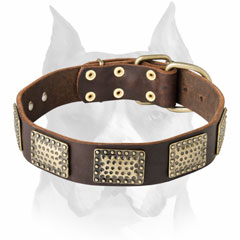 Rich and gorgeous Amstaff leather dog collar