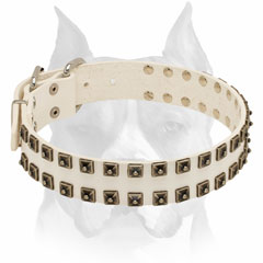 Solid white leather Amstaff collar decorated with studs