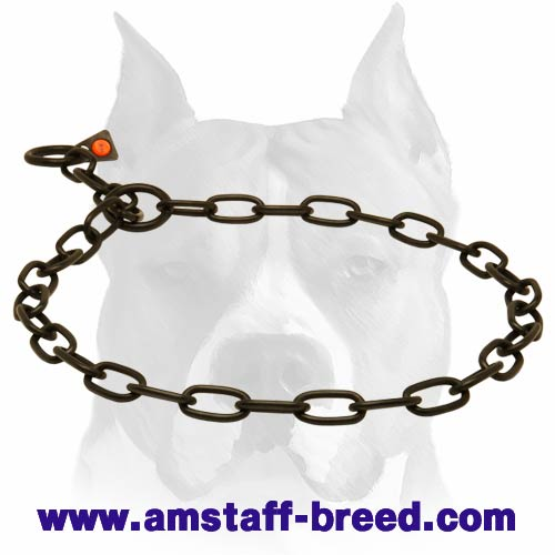 Metal Chain Collar for Amstaff