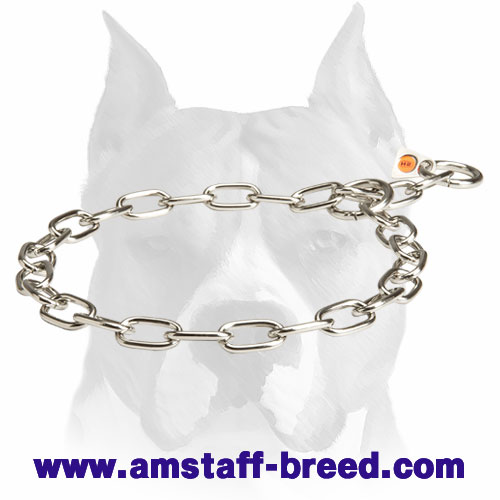Steel Choke Collar for Amstaff