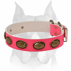 Natural materials leather dog collar for female Amstaff breed