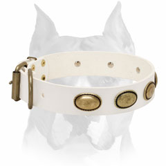Genuine leather Amstaff breed collar
