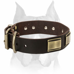 Pure leather dog collar with buckle and D-ring for Amstaff
