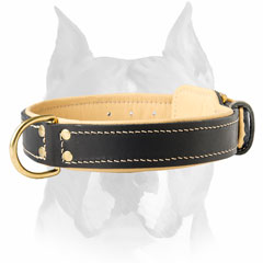 Extra soft genuine leather Amstaff breed collar