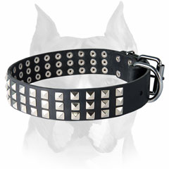Amstaff decorated with pyramids leather dog collar