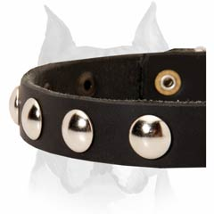 Attractive leather dog collar for Amstaff