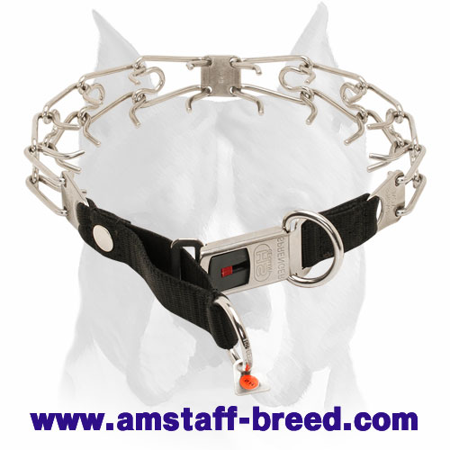 Rust Resistant Amstaff Collar with Buckle