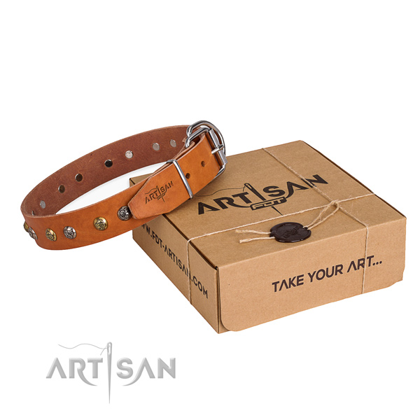 Everyday walking dog collar with Amazing rust resistant studs