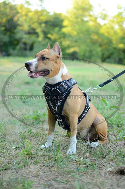 Leather Amstaff painted dog harness