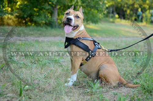 High quality leather Amstaff pulling harness