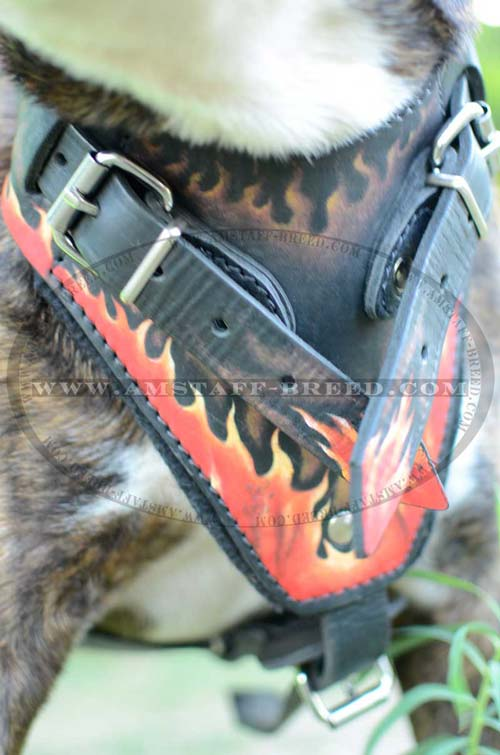 Amstaff dog harness with painted chest plate