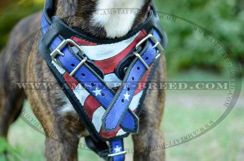 Felt padded leather chest plate of Amstaff harness