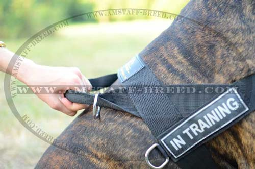 Nylon dog harness with id patches for Amstaff