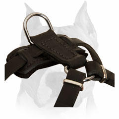 Pure leather dog harness for Amstaff puppies