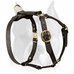 Leather harness for Amstaff dog