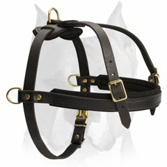Reliable pulling harness for Amstaff