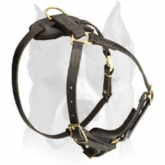 Tracking leather harness for Amstaff