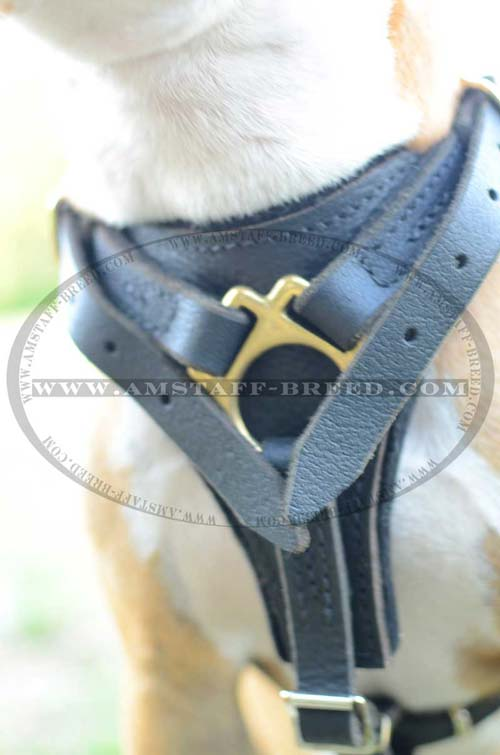 Front part of this leather harness