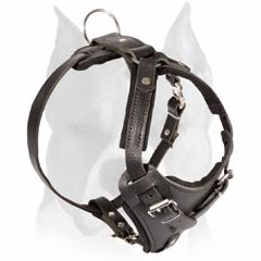 Leather agitation harness for Amstaff