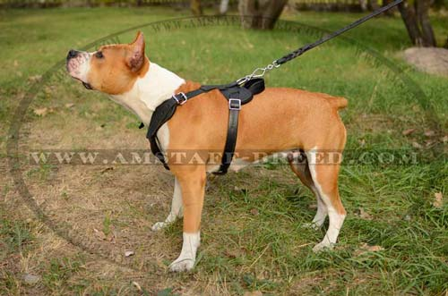 Leather dog harness with chest plate