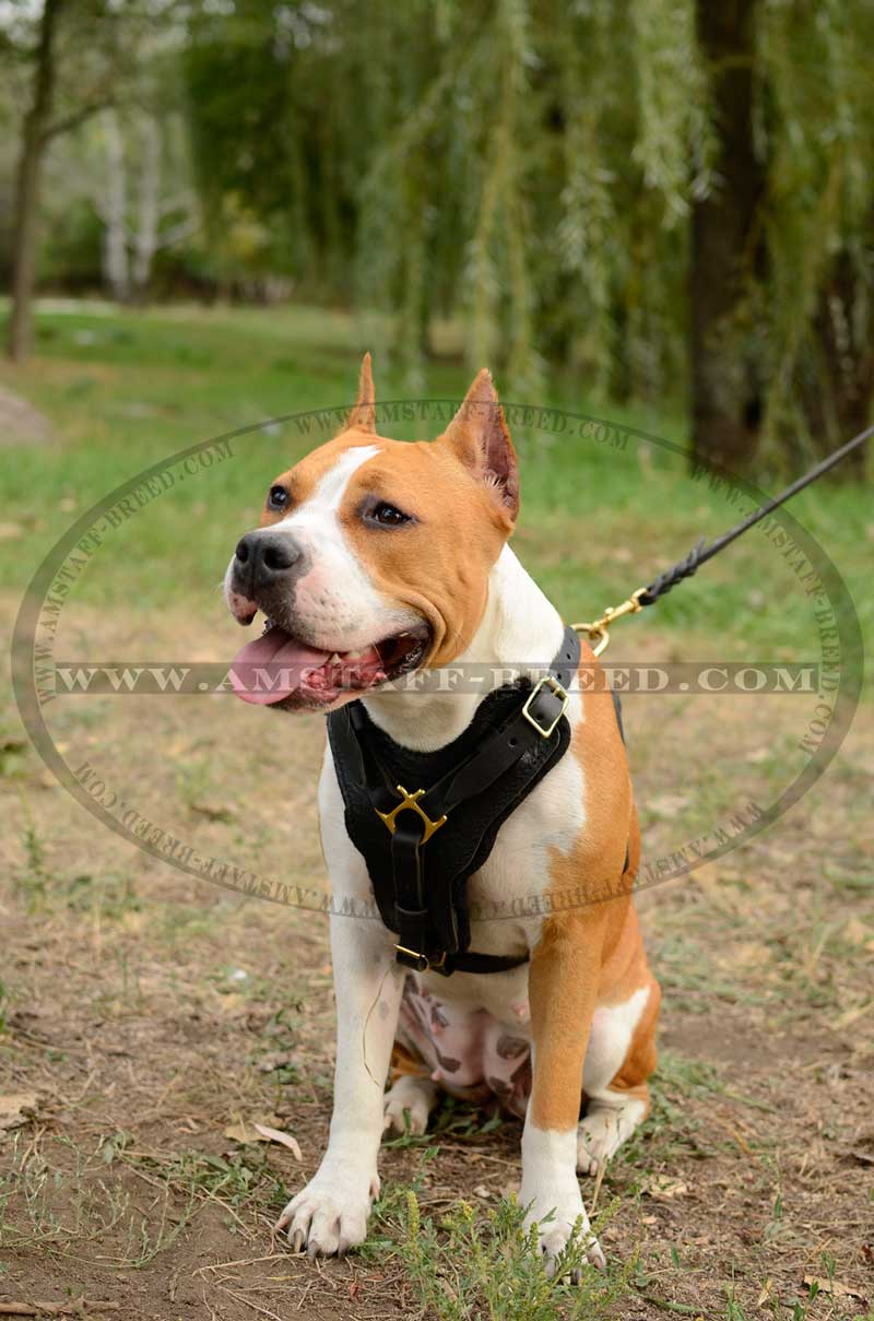 P 15 2 In 1 Bitless Bridle Made From Beta Biothane Solid Colored moreover Obedience Whip 16 as well Soft Ban Synthetic Padding 75cm Bsn besides Leather Key Fob together with Index. on leather dog harness