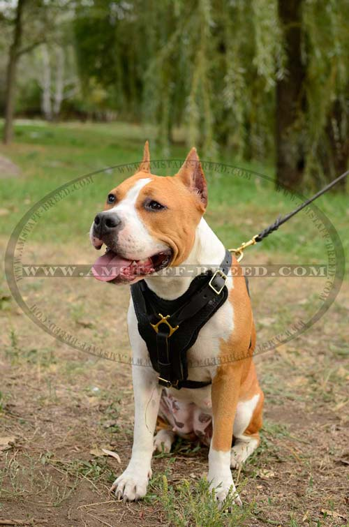 Leather dog harness suitable for walking and training